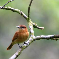 Wild Bird Diets