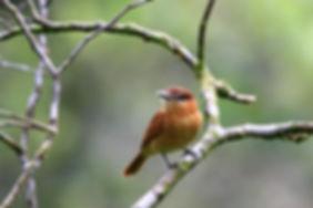 Bird watching in Minneapolis