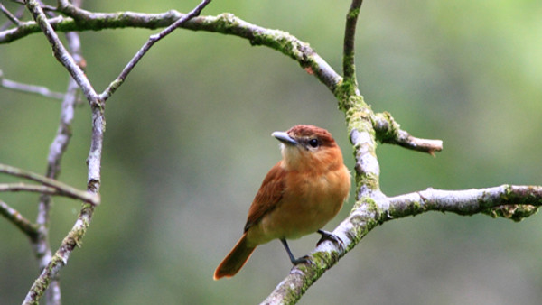 Vogelstimmen- exkursion