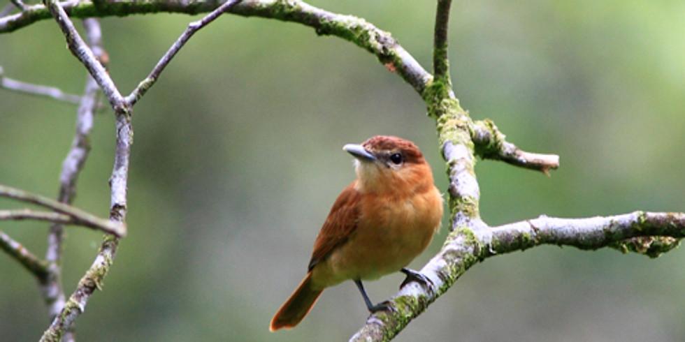 Building Better Birders Workshop