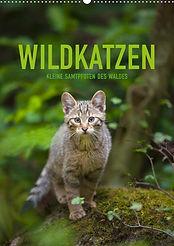Wildkatzen 2020 Kalender