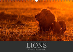 Lions Wildlife Photography Calendar 2020