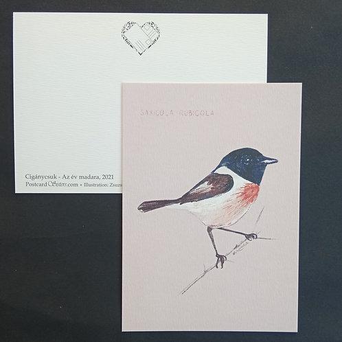 Saxicola rubicola - postcard