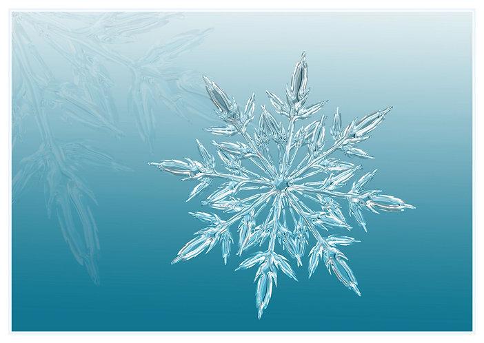 Snowflake - Postcard