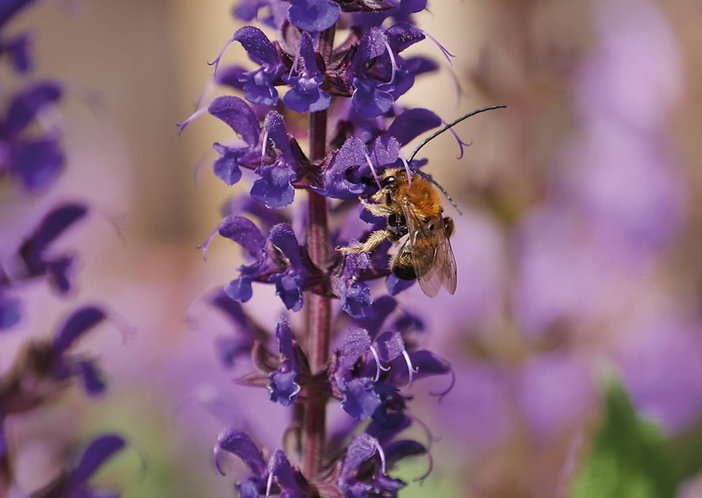 Bee - Postcard