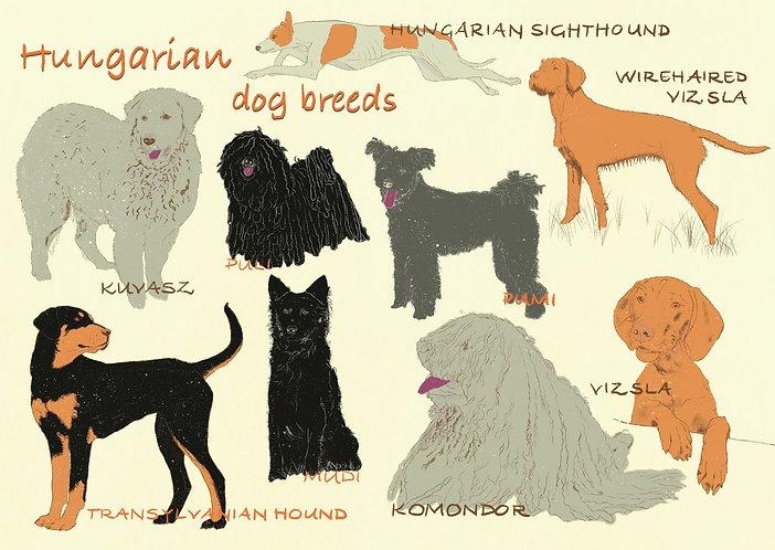 Hungarian Dog Breeds - Postcard