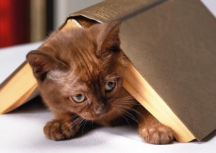 Lurking cat - Postcard