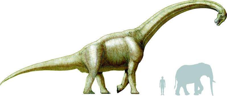 Le brachiosaure est un des plus gros dinosaures.