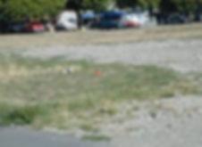 Plaine de Plainpalais dans les années 2000