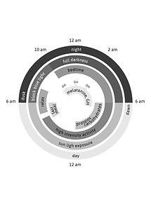 CIRCADIAN CYCLE.jpg