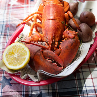6 Live Maine Lobster