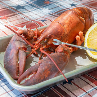 8 Live Maine Lobster