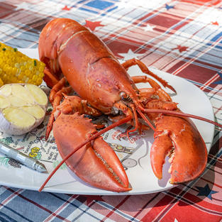 4 Live Maine Lobster