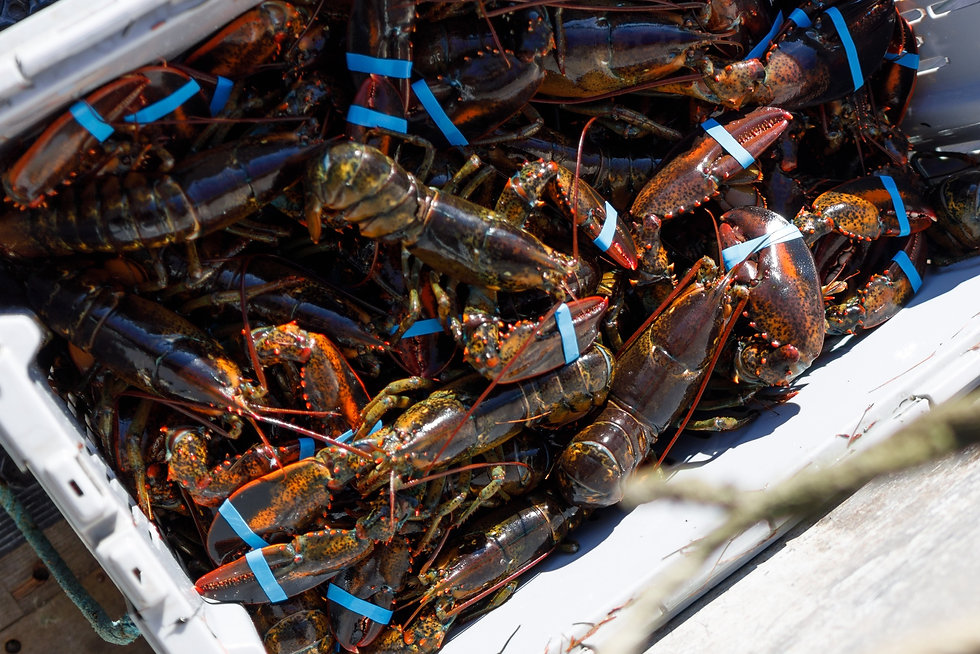 Fresh Maine Lobster_edited.jpg