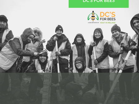 DC's For Bees - October 25th Launch day 2019 - Highlights!