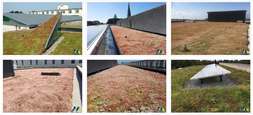 MOY Materials Green Roofing