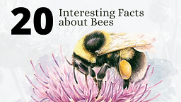 20 Interesting Facts about Bees.png
