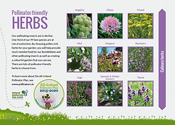 Flyer_Herbs_Thumbnail.png