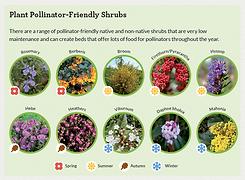 SLIDE_Pollinator-friendly-Shrubs_Thumbna
