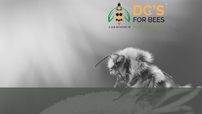 'DC's For Bees' Initiative Launched By Host In Ireland & Industry Partners