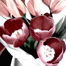 A GIFT OF TULIPS