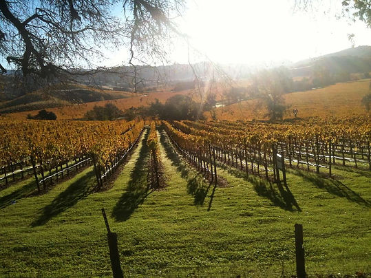 Northern California Wine Country in the Fall