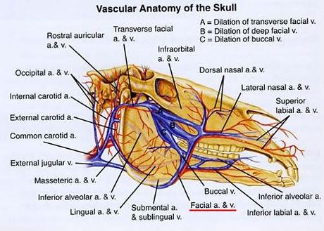 vascular.jpeg