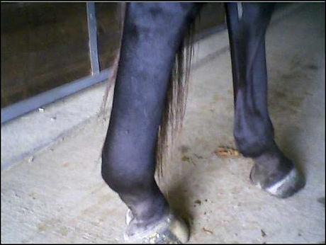 swollen leg.jpeg