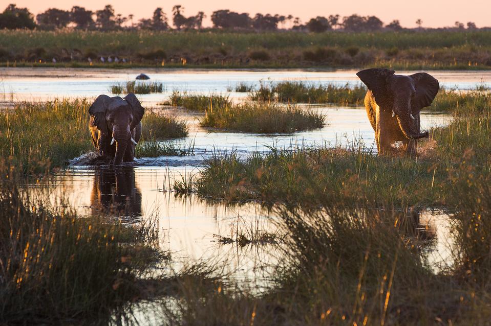 ROAR AFRICA [luxury travel]