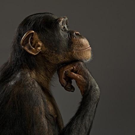 Şempanzelerde Öz Denetim Zeka ile Bağlantılı