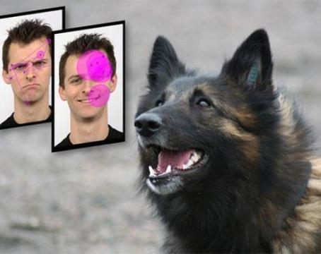 Köpekler, Oksitosin Hormonu Sayesinde Gülümseyen Yüzleri Daha İlgi Çekici Buluyor