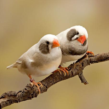 Kuşların Ötüşleri Bebeklerin Konuşmayı Öğrenişine Dair Sırları Saklıyor Olabilir