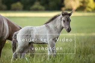 PlatzhalterVideo_2.jpg