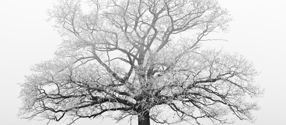 "Ask A Winter Tree: ""How Can I Handle Limits?""--------7 Steps To Overcoming Setbacks and Loss"