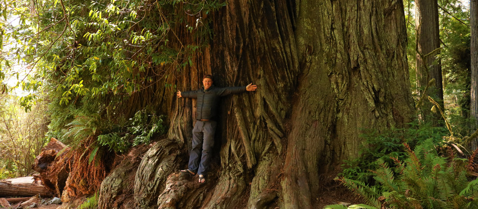 Lessons From A Redwood Tree