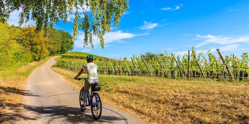 Biciclettata Bike & Wine in Franciacorta