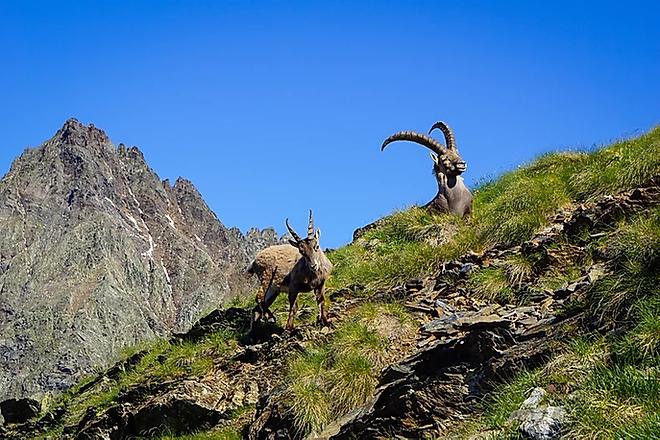 Escursioni Orobie Stambecchi.webp