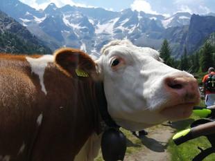Pale Dolomiti 14.jpg
