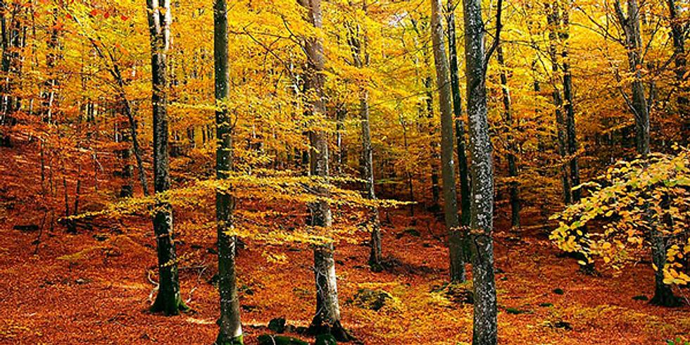 Escursione Fotografica ai 3 Faggi tra i colori dell'autunno
