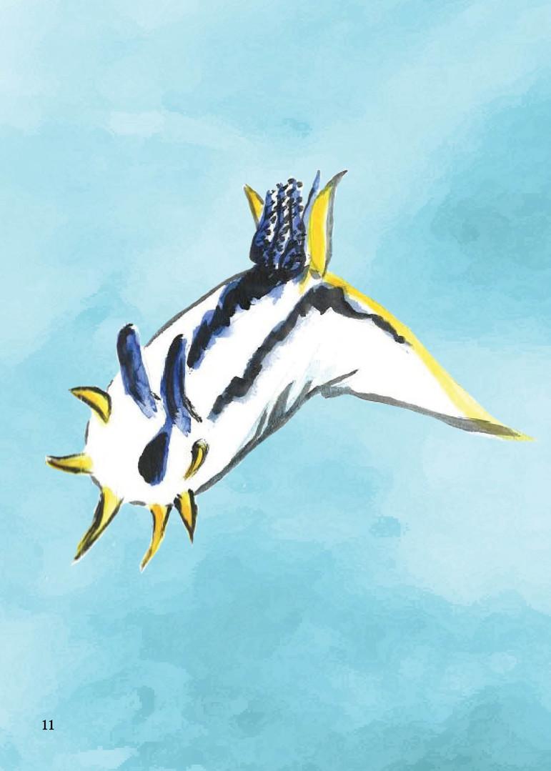 Nudibranch Book