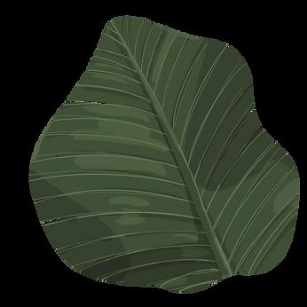 banana_leaf_01.png