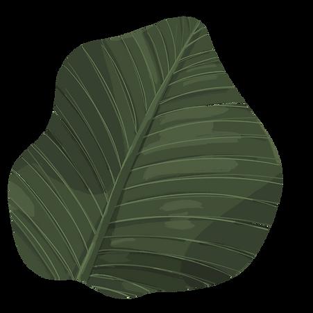 banana_leaf_01_edited.png