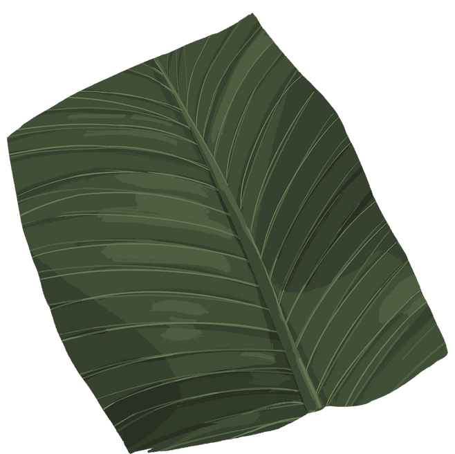 banana_leaf_03.png