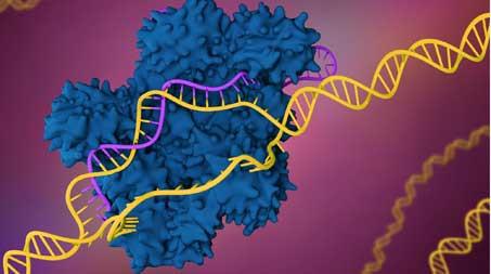 CRISPR Contra Coronavírus