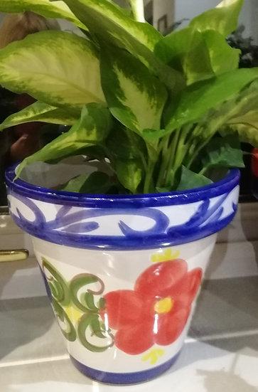 Plant Pot - Clasico