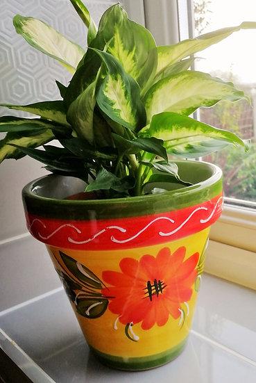 Plant Pot - Olivas R