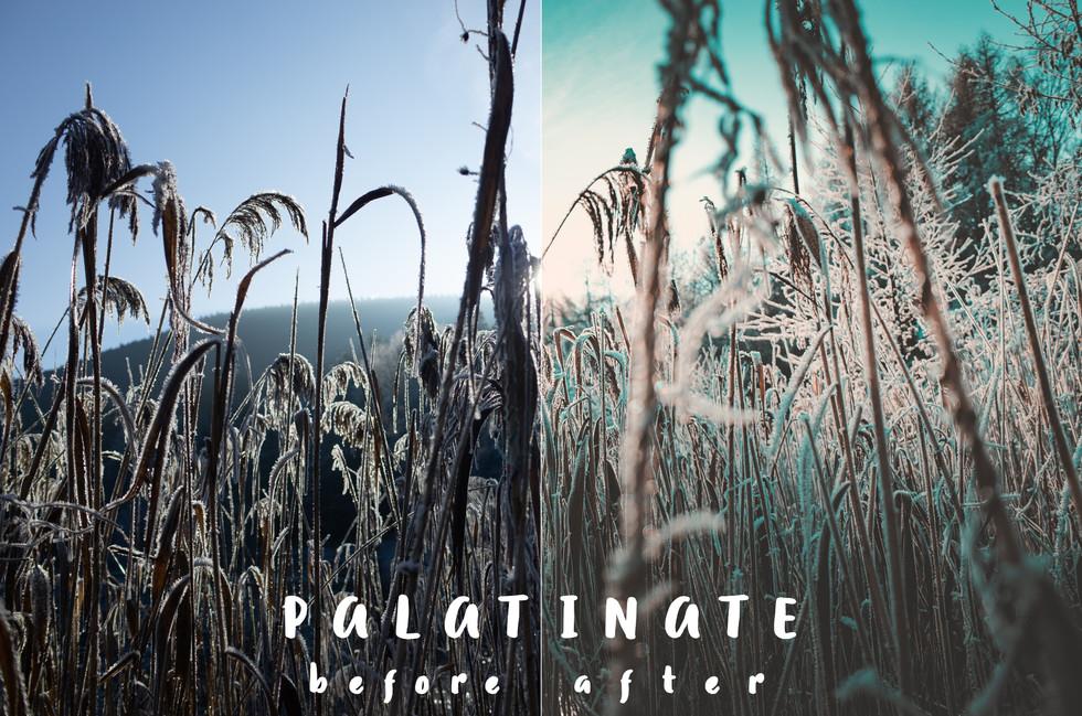 Bsp_Palatinate.jpg