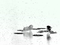 SERENITY in the rhythm of the rain