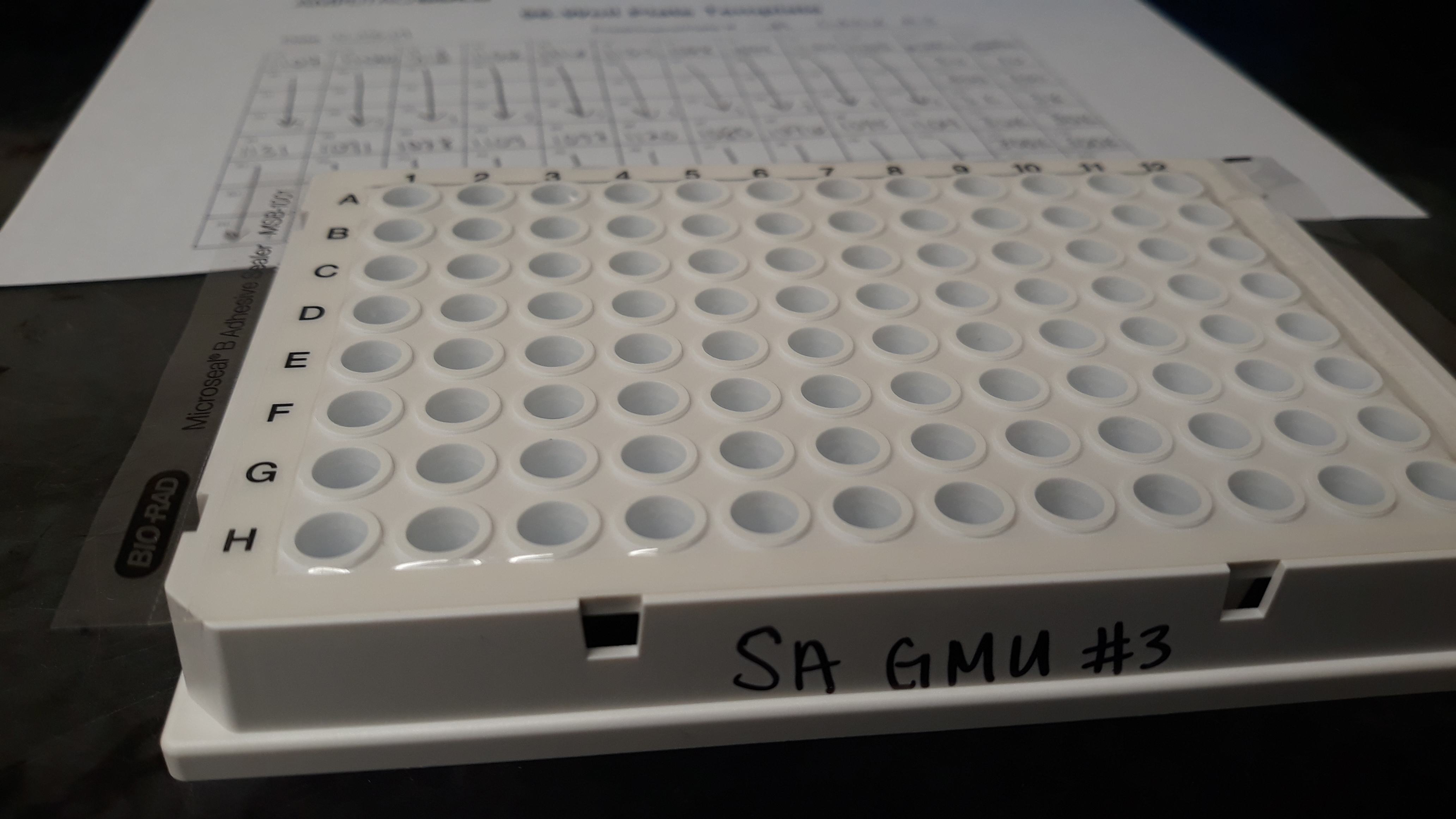 qPCR plate prepared for 20 samples