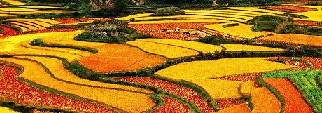 kunming-cov2.jpg